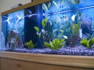 Suzi Crafter: 125-gallon fish tank that Michael built