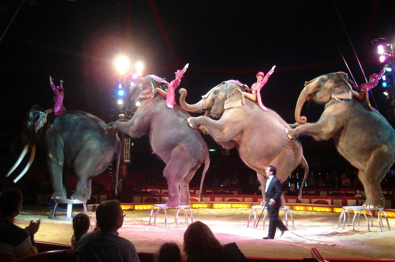 the circus life of an animal Ringling brothers was also embroiled in a 14-year lawsuit in which animal rights groups alleged the circus where circus elephants a shine to circus life.