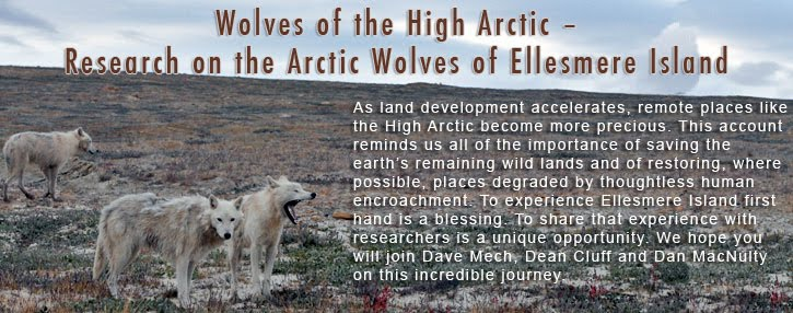 Wolves of the High Arctic  Research on the Arctic Wolves of Ellesmere Island