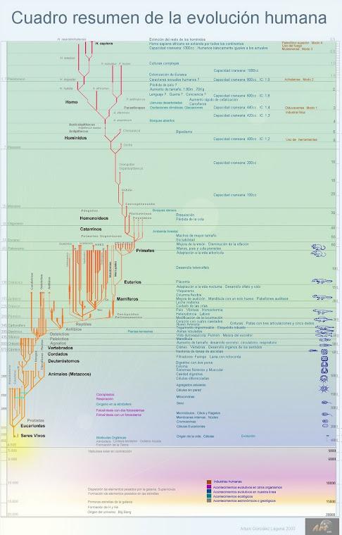 EVOLUCIÓN: DESDE EL BIG BANG AL HOMBRE