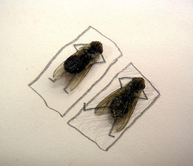 [mosca2.aspx]
