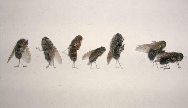 [mosca8.aspx]