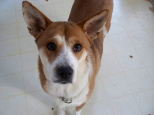Small Dog Veterinarians