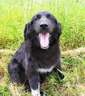 Tennessee Big Fluffy Dog Rescue Paypal