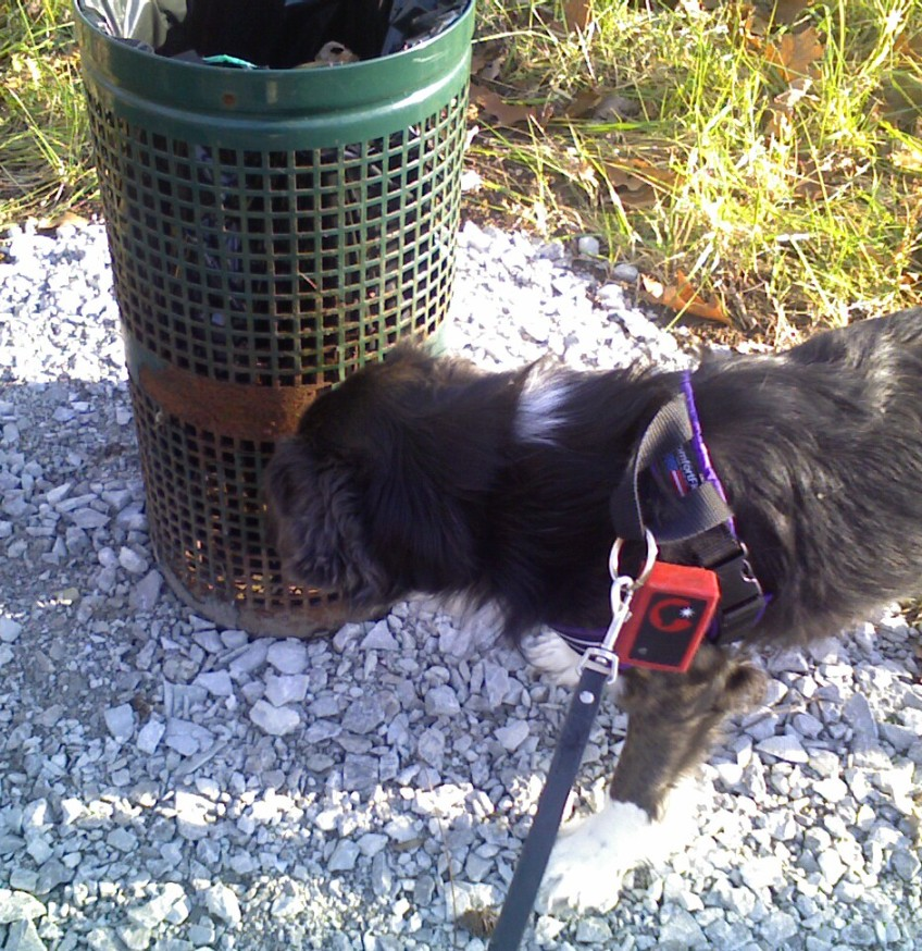 Dog Brush For Getting Burrs Out