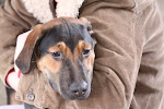 Update. I heard Buddy was rescued. 1/12/10 Desperate Dogs in Cadiz Ohio Pound