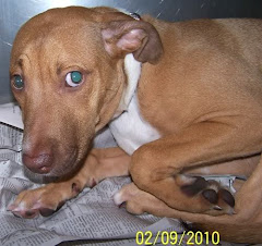 2/21/10 Youngstown, OH ~ URGENT!! ~ ABSOLUTELY PETRIFIED AND IN DANGER OF BEING HEARTSTICKED!!!!