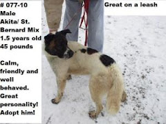 3/14/10 Many Great Dogs in Zanesville OH Pound Will  BE Euthed This Week. Pound Overcrowded.