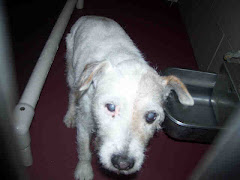 MurfreesboroTN This DOG - ID#A076346 CRITICAL the shelter is full