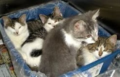 12/03/09 Cat and Kittens on Deathrow Gassing Pound Ohio. Pound VERY  Rescue Friendly. Can Transport