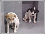"9/23/10 "" Fax Answering Machines  Will Be Checked Before Euth."" Please help this shelter save lives"