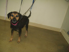 11/27/10 Tatum is in OH Shelter