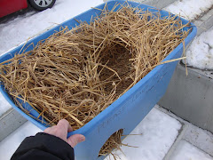 2/1/10 How To Make a Winter Shelter  for Homeless Ferals and Outdoor Cats