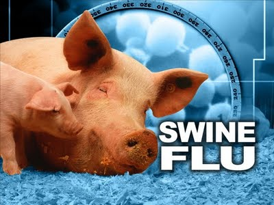 Symptoms Of Swine Flu. Swine flu in pigs does not