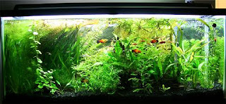clear water aquarium