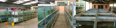 tropical fish farm