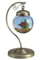 unique fish bowls