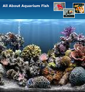 All About Aquarium Fish Magazine May 2010 Issue