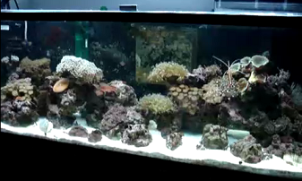saltwater tropical fish tank