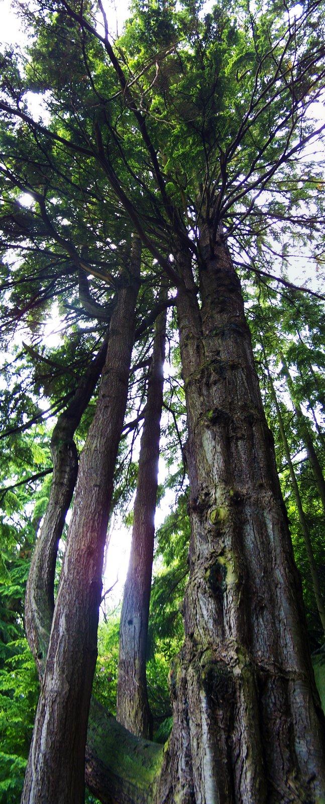 [Big+Tree]
