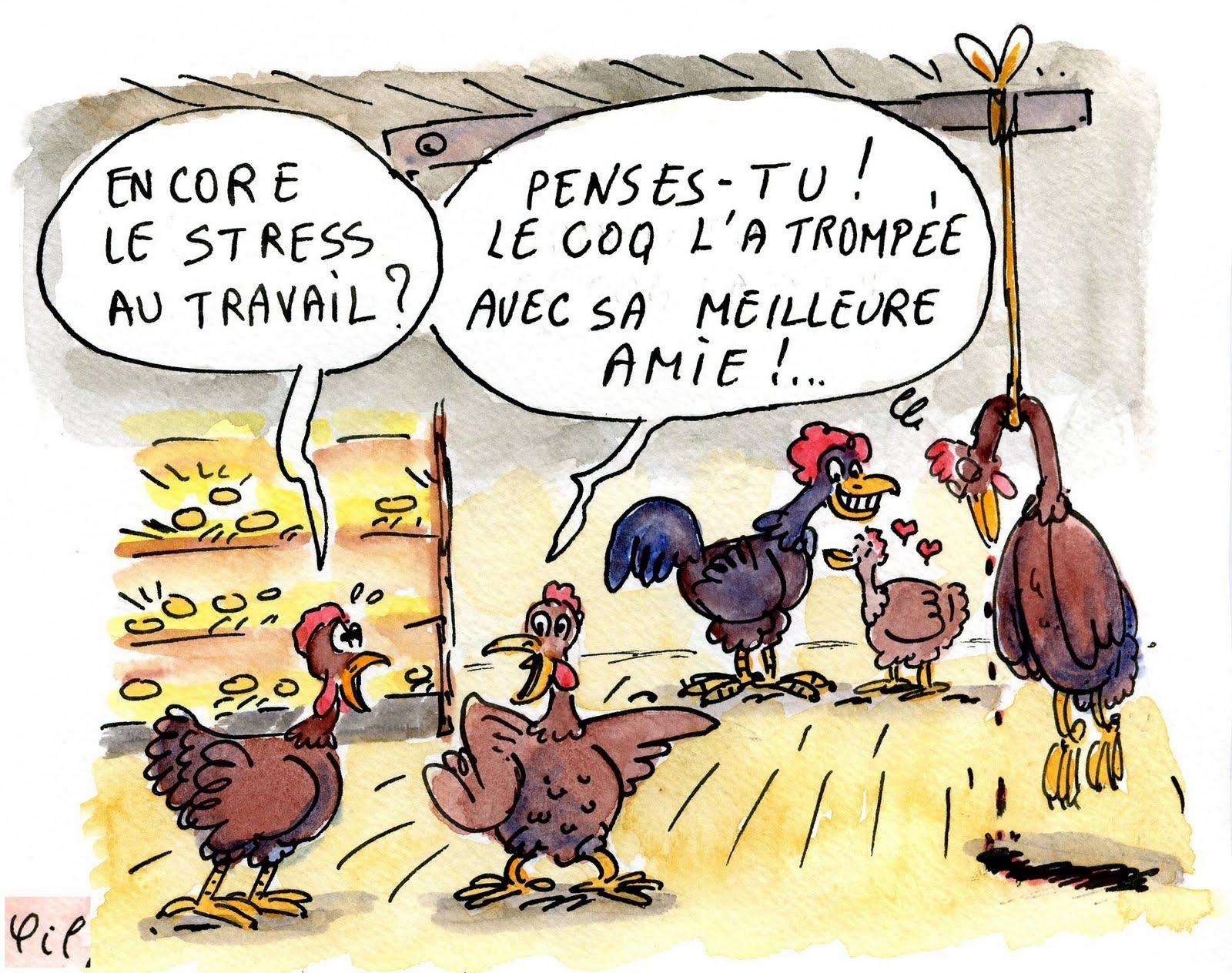 http://4.bp.blogspot.com/_0LLFYJ9FB7k/TApnpksBl0I/AAAAAAAACJY/BAw6ZM3nNsg/s1600/suicide+de+la+poule.JPG