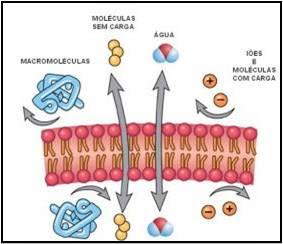 No centro, substâncias atravessam a membrana através do transporte passivo