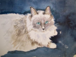 blue-eyed cat