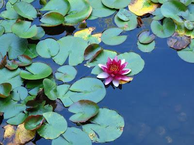 lotus pond portland chinese garden beth hemmila