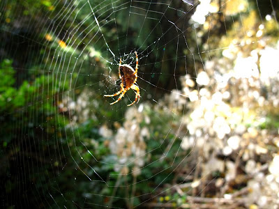 spider with sunlight photo