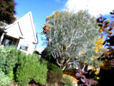 fall spider photo