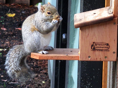 wood box squirrel feeder
