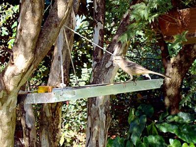 Muito verde e contato com a natureza no Ton's Restaurante, a morada de muitos pássaros e espécies nativas