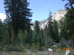 Mt. Charleston again - I really miss green!!