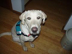 Archie - 10 months