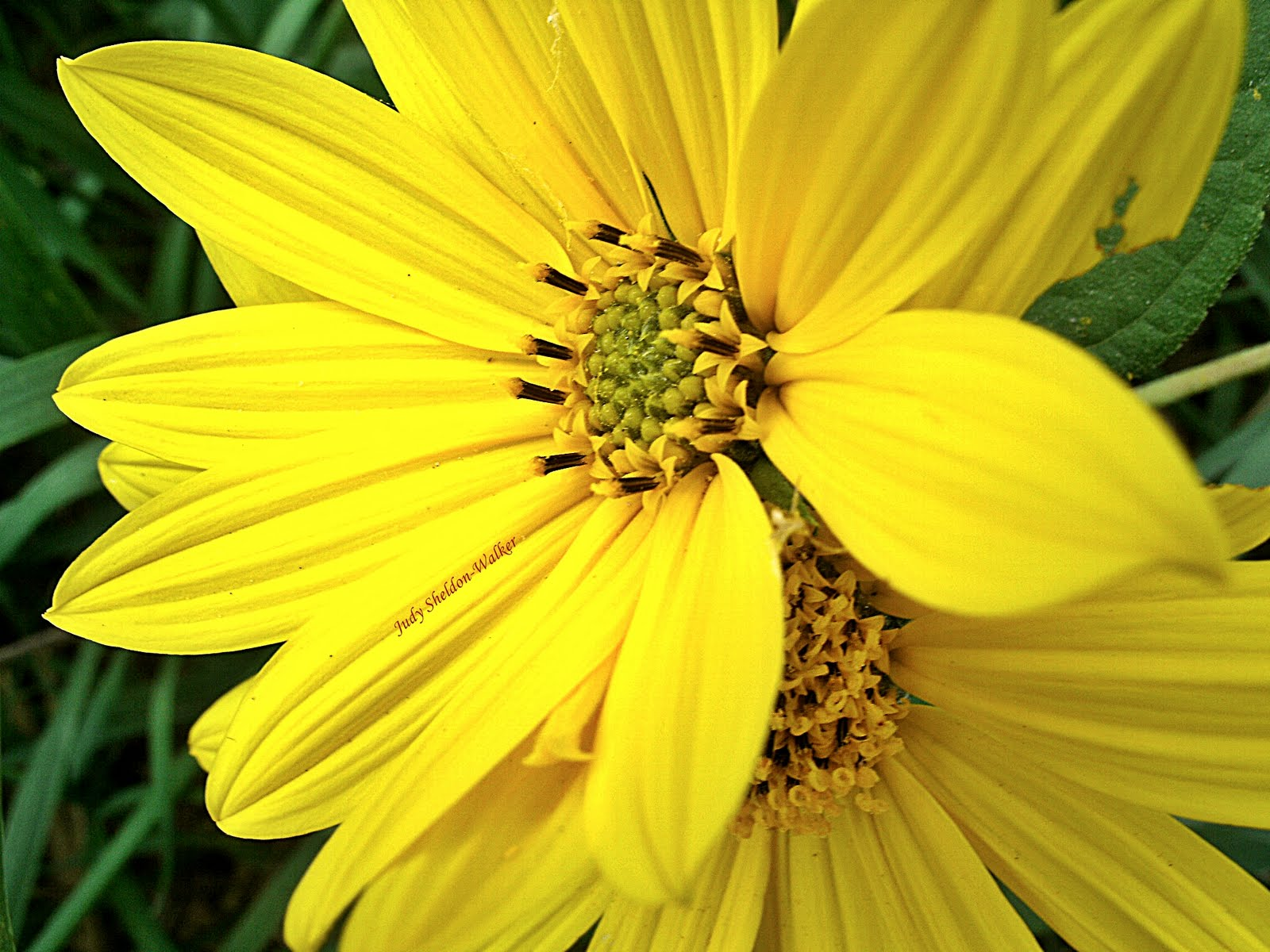 yellow flower pictures - photo #5
