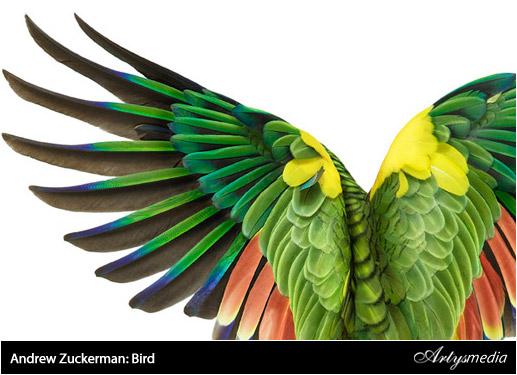Leamos algo - Resumen 1ª Semana de Febrero 2010 - Andrew Zuckerman: Bird