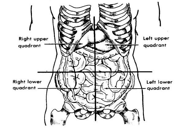 4 Quadrants of the Abdomen http://nursesdeathnotes.blogspot.com/2010/06/organs-in-body-quadrants-and-regions.html