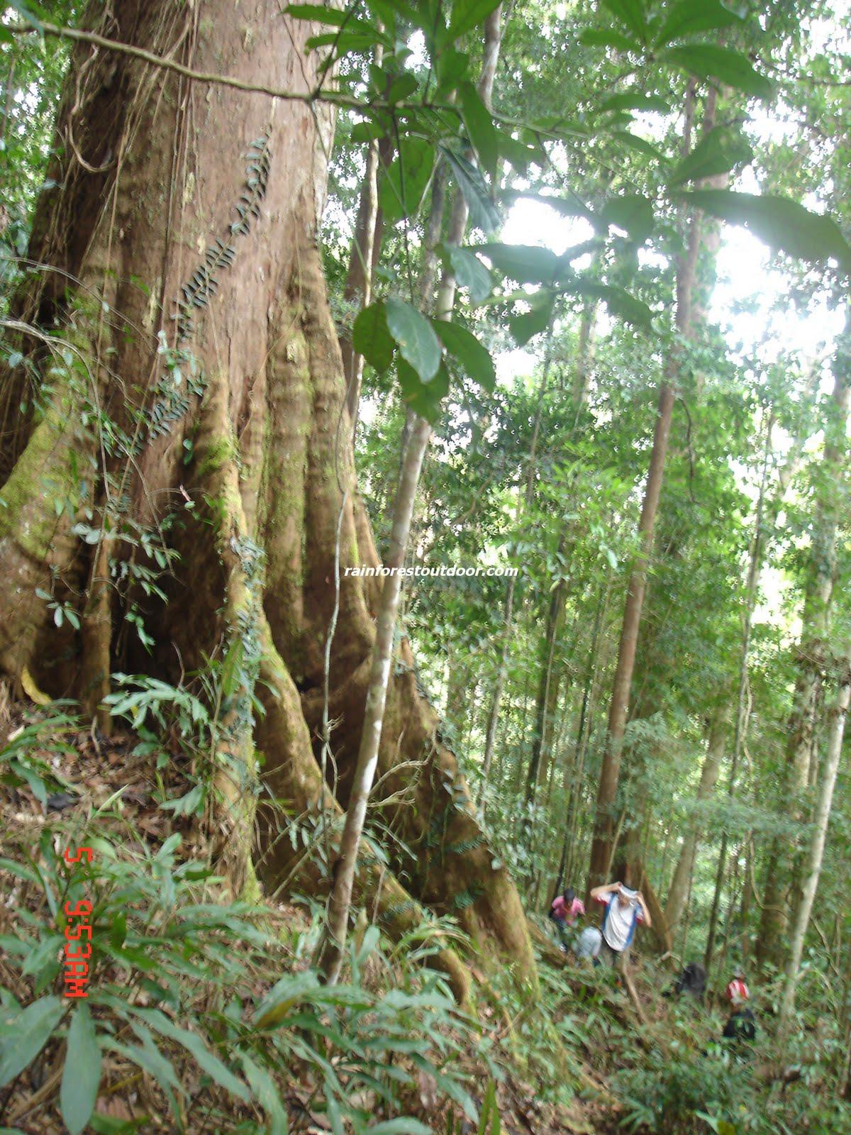 http://4.bp.blogspot.com/_0Pe-fAsXjvU/S-wpd536BYI/AAAAAAAAAhA/y4DIEgkmdDc/s1600/rainforest%25252525252Btree.jpg
