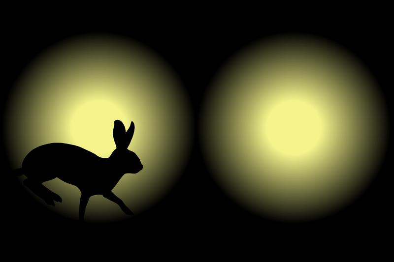 [rabbitinheadlights]