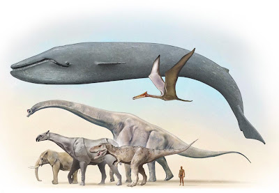 Cr nicas de la ciudad sin nombre la ballena azul el for Cual es el colchon mas grande