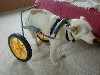 Lanie S Homemade Dog Wheelchair Homemade Ftempo
