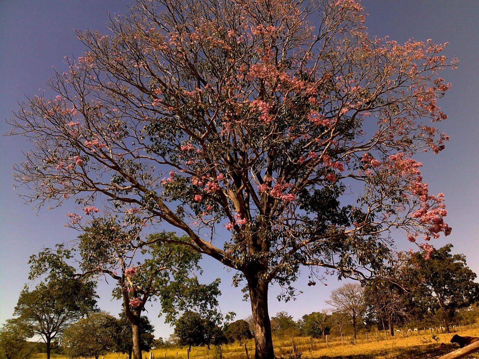 Imagenes De Plantas De Rosas - PLANTAS Y FLORES (5) Rosas (1) YouTube