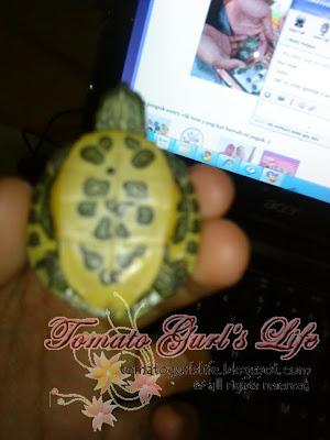 Gambar masa first time beli kura-kura