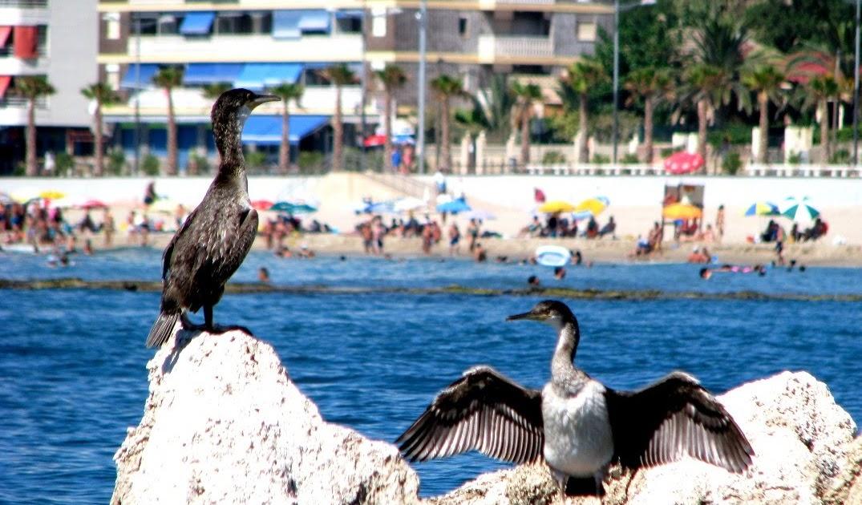 Marins Playa Hotel Majorca