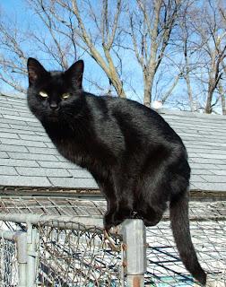 Inteligencia gato. Gato sobre una valla