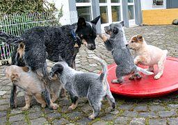 Inteligencia perro. Cachorros con su madre