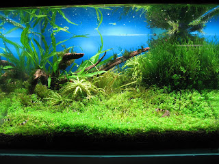 Aquascaping - Die Natur im Aquarium (Bodengrund und Hardscape ...