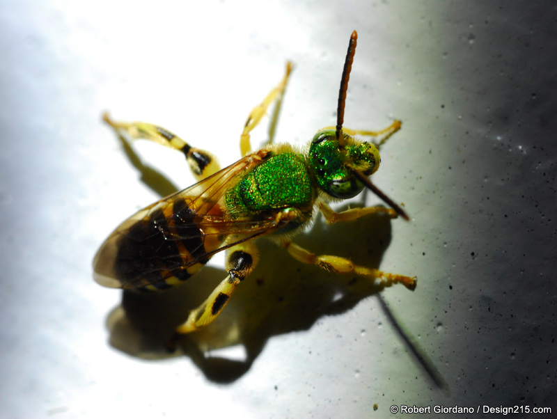 Insect Macro