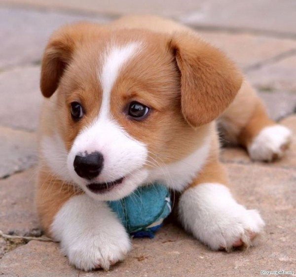 very cute puppies pictures. pics of cute puppies and dogs.