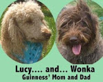 Mountain Creek Labradoodles Web Site